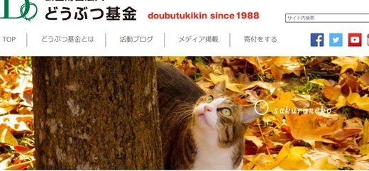 捨て猫を殺処分から、寄付で救う!動物愛護団体の募金先3選