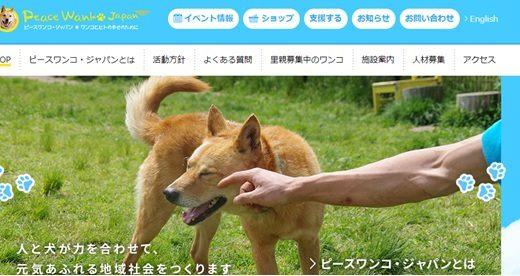 捨て犬を殺処分から、寄付で救う!動物愛護団体の募金先3選
