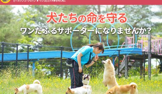 日本国内の支援団体に寄付するなら?貧困・教育・動物保護など、募金先NPO3選