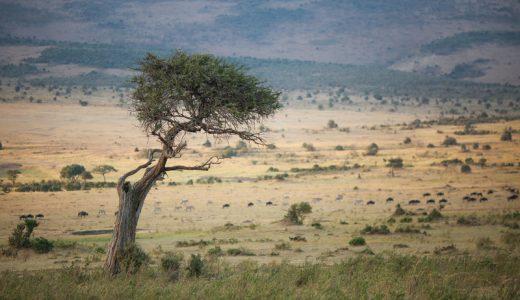 アフリカへの支援、無駄になってない?現地の自立に注力する団体・NGO5選