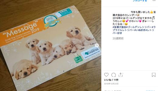 日本盲導犬協会の評判や口コミは?寄付先として、信頼できるかをチェック
