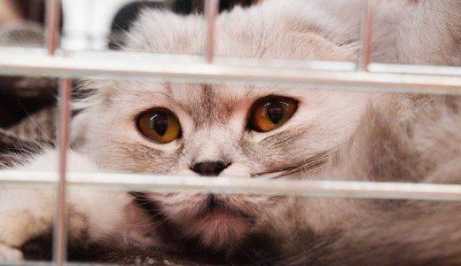 シェルターに寄付したい!犬や猫の動物愛護から国際協力まで募金先NPO3選