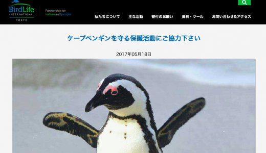 ペンギンを救う活動に寄付したい!絶滅危機の動物を守る募金先団体3選
